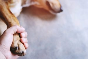 Losing a pet can make the hardest heart cry. Please also review our Pet Loss Grief Counseling training to learn more