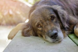Pet grieve the loss of a loved one like anyone else.  Please also review our Pet Loss Grief Counseling Certification
